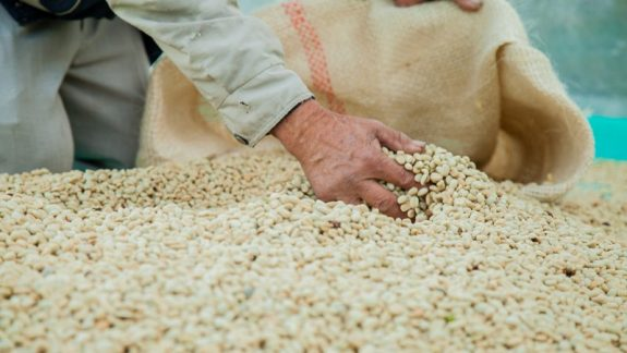 FNC redoubles efforts to increase profitability of Colombian coffee growers