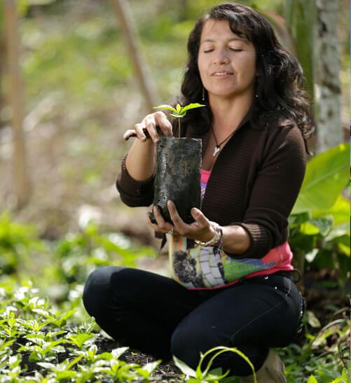 Fundación Ecológica Cafetera (FEC)
