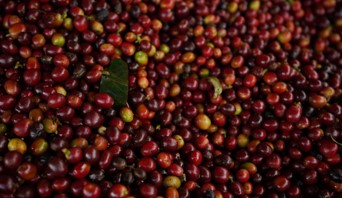 Colombian coffee production closed 2019 at 14.8 million bags