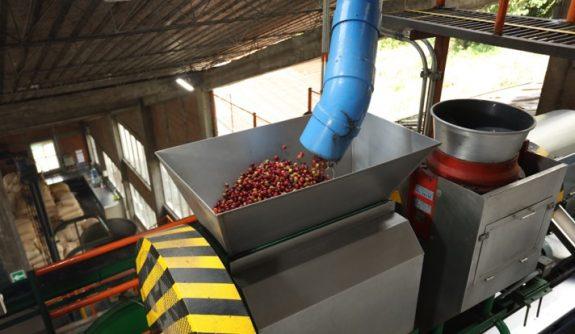 El mantenimiento eficiente de la despulpadora de café