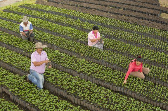 Comprometida con la salud y el bienestar de todos, FNC adopta medidas a nivel nacional