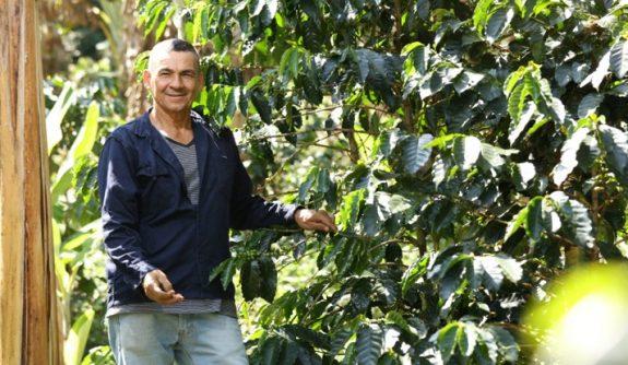 Anuncian apoyo a pequeños productores por $8.572 millones para renovación de cafetales