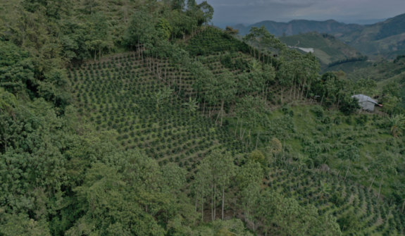 The FNC contributes first 240,000 trees to Colombia's national reforestation goal