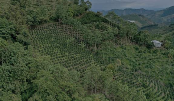 FNC contribuye con primeros 240 mil árboles a meta de reforestación nacional