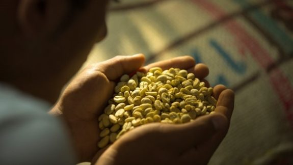 Colombian coffee production falls 12% in March