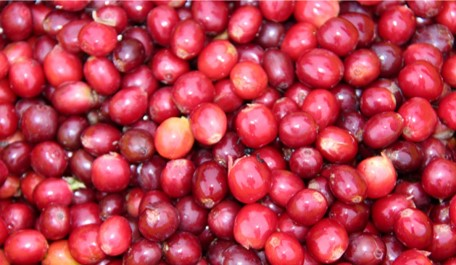 YTD Colombian coffee production grows 5%