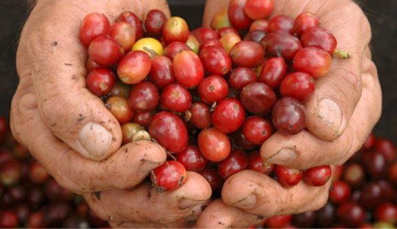 Precio del café sube en tiempos de coronavirus