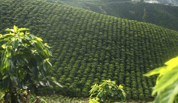 La variabilidad climática y la adaptación de nuestra caficultura