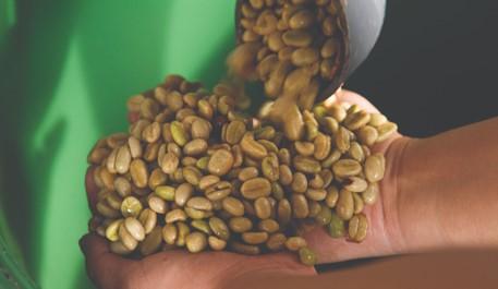 Presentan guía de buenas prácticas de poscosecha para café lavado colombiano