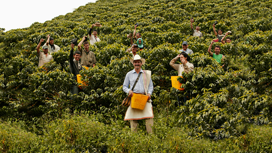 Coffee growers own the most complete geo-referenced database in Colombia