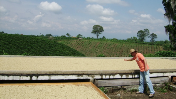 Coffee institutions mitigate negative effects of violence on coffee farming