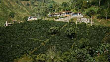 COP 155 billion to be delivered by the Government to support the coffee sector