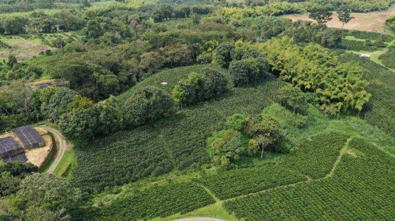 Producción de café de Colombia cae 3% en agosto