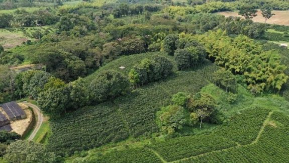Colombian coffee production falls 3% in August