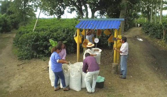 ¿Y qué es Institucionalidad Cafetera?