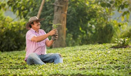 Starbucks y la Federación Nacional de Cafeteros  donan 23 millones de plántulas de café a miles de  caficultores en Colombia