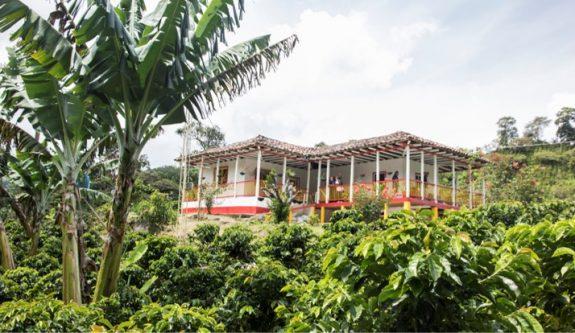 Producción de café de Colombia en 2020 fue de 13,9 millones de sacos