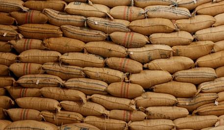 Colombia se alista para recoger más de 6 millones de sacos de café este primer semestre