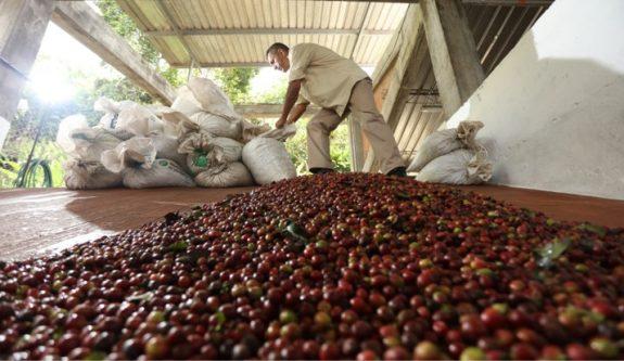 Producción de café de Colombia crece 11% en febrero