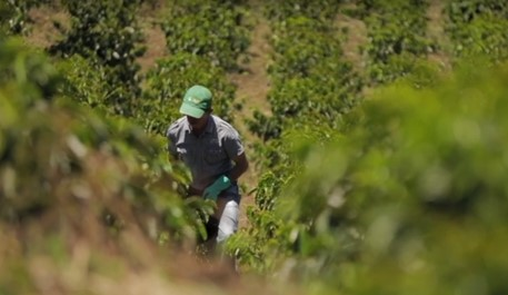 Colombian coffee production grows 30% in March