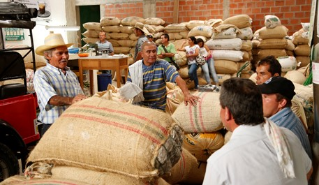 Producción de café de Colombia disminuye 8% en julio