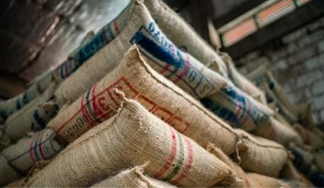 Producción de café colombiano crece 22% en septiembre