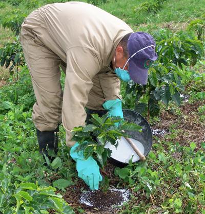 Abono para caf caf - Abono organico para plantas ...