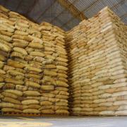 Producción cafetera de julio supera el millón de sacos