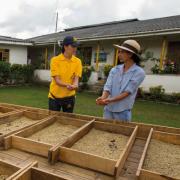 Colombia cerró 2015 con cosecha cafetera récord en últimos 23 años