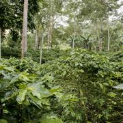 Café de Colombia ofrece una gran variedad de cafés especiales y perfiles de taza