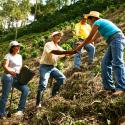 La institucionalidad cafetera atenúa los efectos negativos de la violencia en el cultivo de café