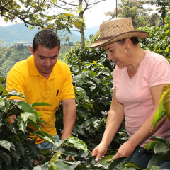 The Extension Service Refocuses Efforts on Profitability of Coffee Growers