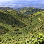 Producción de café de Colombia llegó a 11,5 millones de sacos en los últimos doce meses
