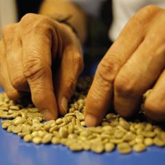 Se modifican las normas de exportación de café de Colombia