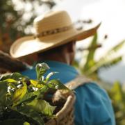 Producción cafetera de Colombia superó el millón de sacos en enero
