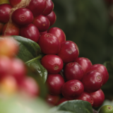 Colombia Produces 944,000 Coffee Bags in March