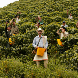 Chinese Visitors Get Closer to the Origin of Café de Colombia