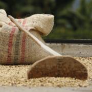 Federación Nacional de Cafeteros toma medidas para proteger el ingreso del productor