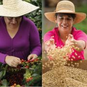 25% de la producción cafetera de Colombia está en manos de mujeres