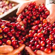 La FNC y Nestlé Nespresso S.A., comprometidos con la calidad