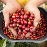 Year-to-Date Colombian Coffee Production Rises 4.8%
