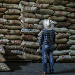 Colombian Coffee Production Rises 8.1% in March