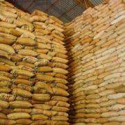Producción de café de Colombia cae 6% en mayo
