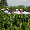 Variedades mejoradas de café, columna de la sostenibilidad