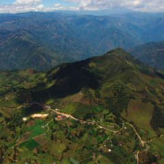 The coffee sector, bastion of equity in Colombia