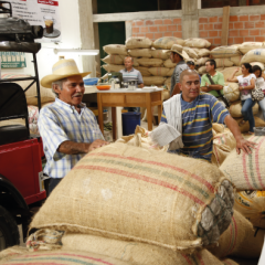 Colombian Coffee Production Rises 7% in February