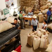 Más de 42 mil millones de pesos invirtieron las cooperativas de caficultores en programas sociales