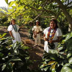Indigenous Worldview in Coffee Farming