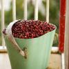 FNC recibe 64 propuestas procedentes de 15 países para optimizar recolección de café