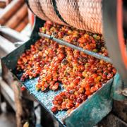 Producción de café de Colombia cae 22,5% en mayo